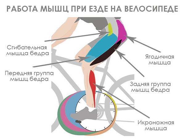Велосипед укрепляет мышцы спины